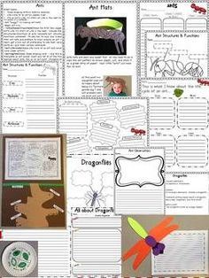 All about ANTS!!! Fun life science lessons and activities!