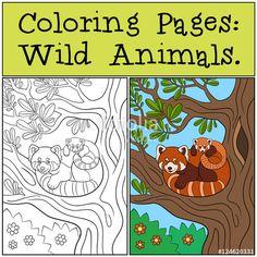 red panda coloring page   Kids   Pinterest   Panda