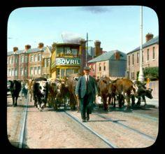 Photographs of Ireland in the The past is a foreign country Dublin Street, Dublin City, Dublin Ireland, Ireland Travel, Old Pictures, Old Photos, Images Of Ireland, Ireland Pictures, Irish Catholic