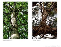 Sittings under the tree - Puun alla istumisia