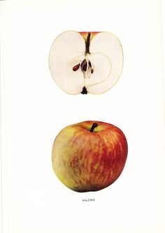 1905 Fruit Print - Salome Apple - Vintage Home Kitchen Food Decor Plate Plant Art Illustration Great for Framing 100 Years Old by Holcroft on Etsy https://www.etsy.com/listing/108426925/1905-fruit-print-salome-apple-vintage