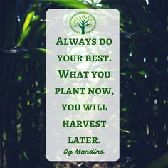 """🌱""""Always do your best. What you plant now, you will harvest later."""" ~Og Mandino 🌳organic"""