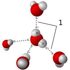 Model of hydrogen bonds (1) between molecules ofwater