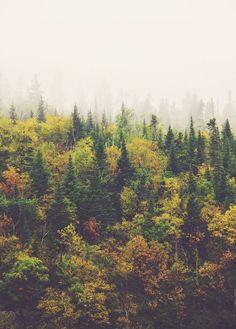 These trees hear my heart beat.