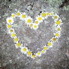 We love daisies! - Summer Flowers of Instagram