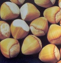 Lieskové oriešky - Plody liesky