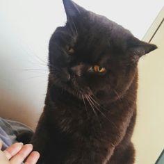 When you're waking them up to no avail😓 Когда будешь своих хозяев все утро безрезультатно😓 #смешнойкот #love #путешествиескотом #cat #котейка #ilovemycat #catoftheday #lovecats #chillin #милаш #instacat #britishshorthair #britishcat #catmyboss #cats_of_world #catsofinstagram #cutecats #мило #британец #британскийкот #cute #милыйкот #британецкот #шоколадныйкот #коты #красивыйкот #толстыйкот