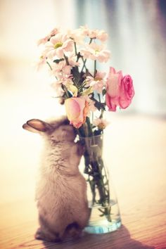 A bunny with flowers. from Ana Rosa Cute Creatures, Beautiful Creatures, Animals Beautiful, Beautiful Things, Baby Animals, Funny Animals, Cute Animals, Spring Animals, Animal Pictures