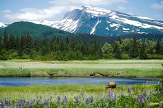 Lake Clark National Park is a land of stunning beauty with steaming volcanoes, craggy mountains and foraging bears. Solitude is found around every bend in the river and shoulder of a mountain. Venture...