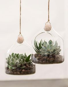 DIY : Glass ornaments with succulents by Søstrene Grene Decoration Plante, How To Make Ornaments, E Design, Interior Design, Plant Decor, Planting Succulents, Glass Ornaments, Plant Hanger, Holiday Crafts