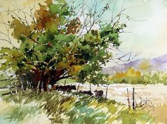 Carl Purcell - Shade Seekers