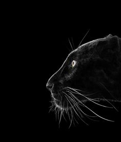 The Black Panther. Animal Portraits by Brad Wilson Black Animals, Animals And Pets, Cute Animals, Wild Animals, Regard Animal, Tier Fotos, African Elephant, Black Panther, Pet Portraits