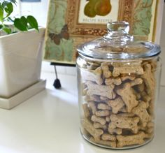 Even your pup will love these glass jars by Anchor-Hocking!  Cute storage idea!