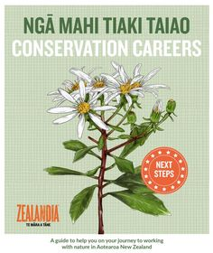 Download this PDF from ZEALANDIA – it brings together conservation careers from across Aotearoa New Zealand. Inside, it has tips for getting started, information on hands-on conservation jobs, training and degree options, as well as ideas for building your CV. Conservation, Get Started, New Zealand, Career, Pdf, Hands, Bring It On, Training, Science