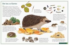 Lernposter vom Natur-Verlag Wawra Learning poster from the nature publishing house Wawra Poster Shop, Abc Poster, Kindergarten Activities, Preschool Activities, Primary School, Elementary Schools, Kindergarten Portfolio, 1st Grade Science, Diy Crafts To Do