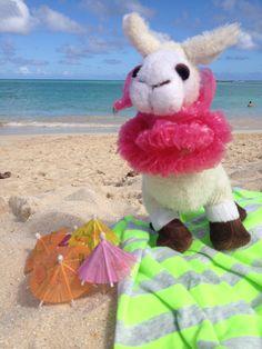 SQUIRTZ at ze beach #hawaii #llama #squirtz #followme #worldtravel #llamalucious #lovellamas #fluffyfriend #sunbathe #beach #bright #lei #umbrella