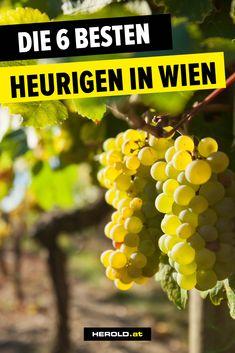 Austria Travel, Places To Visit, Germany, Switzerland, Travelling, Restaurants, Holidays, Tips, Vienna