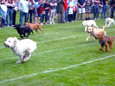 Diamond Dogs: Jubilee Dog Racing at the Village Fete