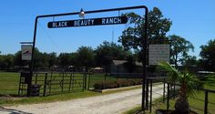 """114/366: Cleveland Amory Black Beauty Ranch- This past weekend we visited Cleveland Amory Black Beauty Ranch.  It was an amazing experience and one I would recommend to all.  The next 14 days, will all be photos of animals taken at the ranch.    """"I have nothing to fear. And here my story ends. My troubles are all over, and I am at home…""""  From Black Beauty By Anna Sewell"""