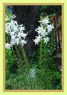 Garden Design, Home And Garden, Floral, Plants, Cottages, Garden Ideas, Gardening, Horsehair, Agriculture
