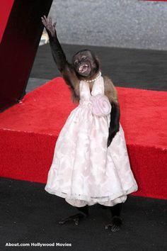 crystal the monkey big bang theorycrystal the monkey movies, crystal the monkey age, crystal the monkey interview, crystal the monkey net worth, crystal the monkey instagram, crystal the monkey night at the museum, crystal the monkey george of the jungle, crystal the monkey friends, crystal the monkey filmography, crystal the monkey pistachio commercial, crystal the monkey films, crystal the monkey big bang theory, crystal the monkey on the red carpet, crystal the monkey dead, crystal the monkey pirates of the caribbean, crystal the monkey movies list, crystal the monkey wiki, crystal the monkey oscar, crystal the monkey youtube, crystal the monkey on ellen