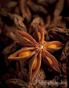 Seeds  Star Anise seed and pod    Whimsical Home and Garden