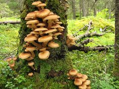 Old-growth forest Finland by Greenpeace Finland, via Flickr