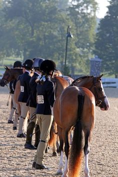 © Ashley N. Williams/PMG: The 2012 US Pony Finals commenced at the Kentucky Horse Park with the Green Pony Hunters and the Medium Pony Hunter Model.