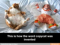 "Copycat / iFunny :) - ""This is How the Term 'Copycat' Was Invented. "" -LRE"
