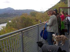 Umani e 4zampe a godersi il paesaggio... i cani (non di grandissima taglia) hanno libero accesso al Castello di Ragogna! http://www.ragognalive.it/site/
