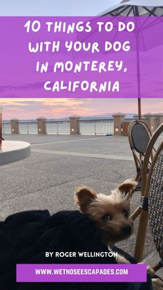 Is Monterey dog-friendly? Is Carmel by the sea dog-friendly? Are you traveling to Monterey with dogs? Find out 10 things to do with your dog in Monterey, CA! #californiatravel #montereydogfriendly #montereycaliforniawithdogs #montereywithdogs #carmelbytheseadogfriendly #carmelcaliforniadogfriendly #dogfriendlycarmelca #dogfriendlycarmel #carmelhighlightsdog #montereythingstodo #thingstodoinmonterey #montereybaycaliforniathingstodo #centralcoastcalifornia #centralcoastcaliforniathingstodo Dog Travel, Travel Usa, Travel Tips, Travel Destinations, Dog Friendly Hotels, Pet Friendly Accommodation, City Of Monterey, Dog Water Fountain, Great Places To Travel