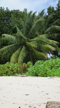 Seychelles anse Sèvére La Digue