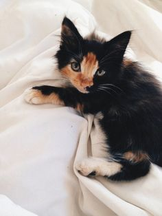 This is pepperkit she is silly and fistey and a paw full she loves her dad more then her mom but loves her mom to!  She thinks dream kit is weird (colorfulworld23)