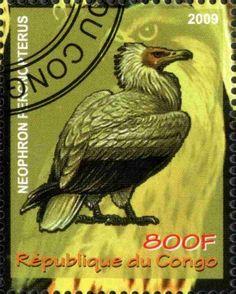Stamp: Neophron Percnopterus (Cinderellas) (Republique du Congo) Col:CG…