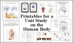 Studying the human body--printables for a unit study
