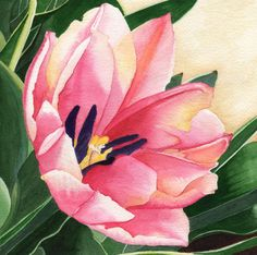 Tulip  •  Watercolor on Paper  •  12x12  •  ©Pam Harp Watercolors Tulip Watercolor, Watercolor Artwork, Harp, Watercolors, Tulips, Plant Leaves, Photo Galleries, Gallery, Paper