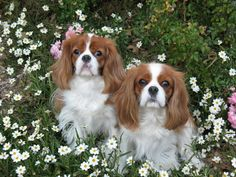Ginger and Sage, sisters now 10 yrs old.