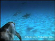 Dolphins Protect Diver from Hammerhead Shark
