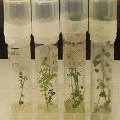 Introduction to Plant Tissue Cultures | eHow