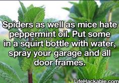 Keep The Spiders And Mice Out Of Your House!