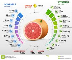 Vitamins And Minerals Of Grapefruit Fruit Stock Vector - Illustration of agriculture, citrus: 92317988 Fruit Nutrition, Nutrition Chart, Vegetable Nutrition, Health And Nutrition, Health And Wellness, Fruit Benefits, Health Benefits, Vitamins For Women, Gastronomia