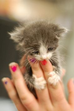 kitty, kitty ~ SO TINY, SEE ITS PAWS, ABOUT THE SIZE OF A FINGERNAIL ~