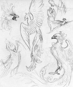 Liking some of the heads & a tail. Phoenix sketches by Shalladdrin.deviantart.com on @deviantART