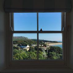 circleofpines' photo on Instagram/ Tresco, Isles of Scilly