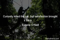 curiosity killed the cat but satisfaction brought it back - Google Search