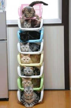 Colourful stack of cats