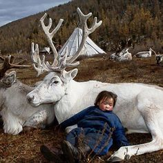 ~In many Shamanistic traditions (including the Saami), White coloured animals have special healing qualities~