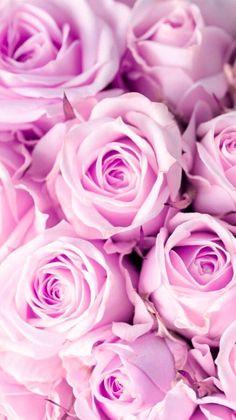 Rose Flower Wallpaper, Flower Background Wallpaper, Flower Backgrounds, Pink Wallpaper, Beautiful Roses, Beautiful Flowers, Virtual Flowers, Aesthetic Iphone Wallpaper, Cellphone Wallpaper