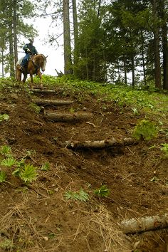 Create steps on downhill slopes to reduce runoff. Dressage, Extreme Trail, Trail Riding Horses, Horse Adventure, Ranch Riding, Bareback Riding, Cross Country Jumps, Horse Exercises, Horse Games