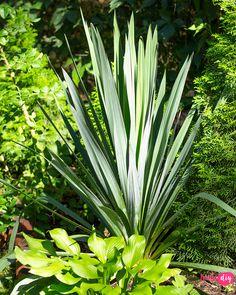 19 roślin, które będą rosły w zacienionych miejscach! - Twoje DIY Nature Republic, Garden Makeover, Backyard, Patio, Bonsai, Outdoor Gardens, Ladder Decor, Diy And Crafts, Pergola